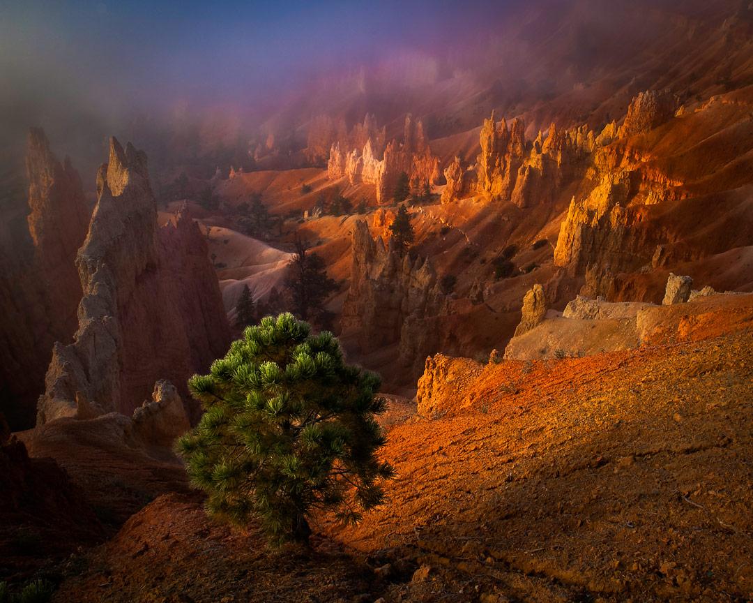 Bryce | Bryce, Utah, USA | Transient Light