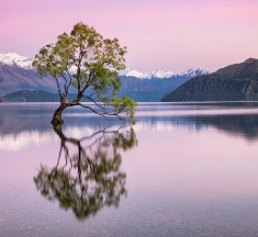 The Wanaka Tree, New Zealand by Neil Protheroe