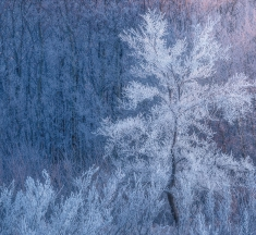 Frost Queen, Saskatchewan, Canada by Scott Aspinall