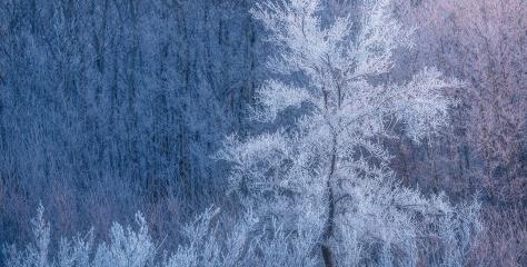 Frost Queen, Saskatchewan, Canada by Scott Aspinall