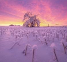 Tree on Fire, Saskatchewan, Canada by Scott Aspinall