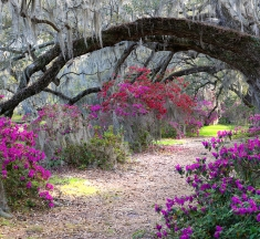 Magnolia Gardens, Charleston, S Carolina, USA by Timothy Joyce