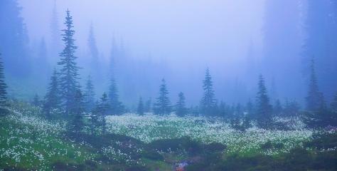 Mount Rainier National Park, Washington, USA by Lynn Hopwood