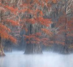 Texas Louisiana Border, USA by David Whiteman