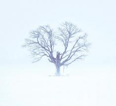 Dundalk, Grey County, Ontario, Canada by Biswajit Patra