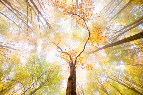 Autumn-Colours-Assignment-Winner-Marta-Breto