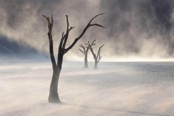 Desert-Land-Assignment-Winner-Peter-Boehringer